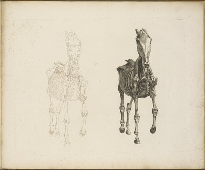 The Anatomy Of The Horse 1766 George Stubbs Europeana Collections