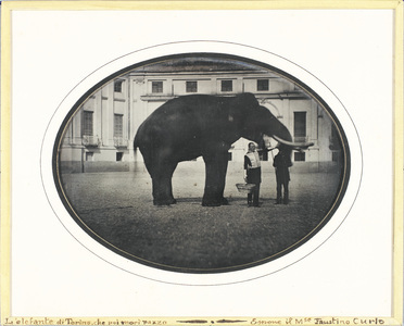The indian elephant Fritz in the Stupinigi Castle