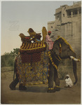 South of India. Government Elephant in State Costume
