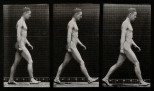 A man walking. Collotype after Eadweard Muybridge, 1887.
