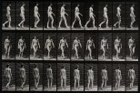A woman walking. Photogravure after Eadweard Muybridge, 1887