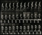 A man walking up stairs. Photogravure after Eadweard Muybrid
