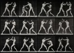 Two men boxing. Photogravure after Eadweard Muybridge, 1887.