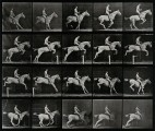 A horse jumping a hurdle. Photogravure after Eadweard Muybri