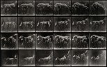 A horse jumping over three ponies. Photogravure after Eadwea