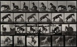 A circus horse. Photogravure after Eadweard Muybridge, 1887.