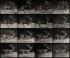 A deer buck running. Photogravure after Eadweard Muybridge,